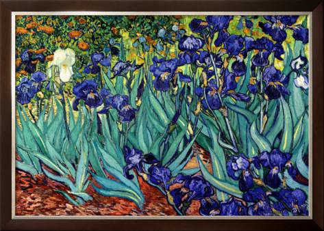 Irises saint remy shop van gogh 39 s oil paintings reproduction for Van gogh irises