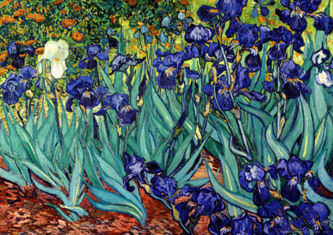 Irises, Saint - Remy - Vincent Van Gogh Paintings