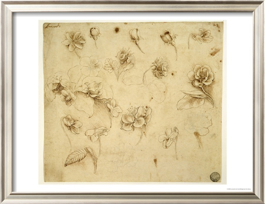 Study Of Flowers, Da Vinci\'s paintings for sale on 1paintings.com