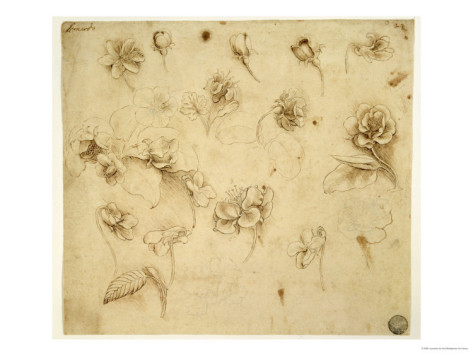 Study Of Flowers - Leonardo Da Vinci Painting
